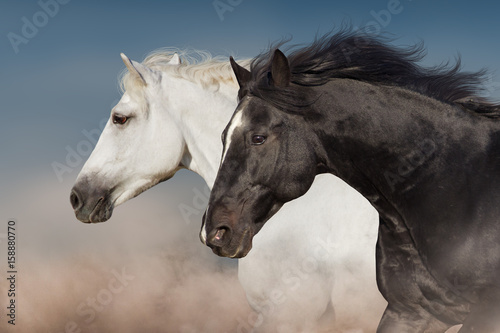 Foto op Canvas Paarden Black and white horse portrait in motion