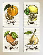 Set Of Cards With Citrus Fruits. Posters With Hand Drawn Elements And Brush Calligraphy Style Lettering. Label Or Signboard Template, Vector Illustration.