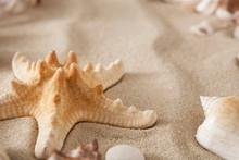 Sea Beach Sand And Seashells Background, Natural Seashore Stones And Starfish