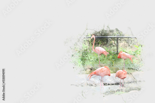 Photo  Abstract Flamingo on watercolor background, Watercolor painting, Flamingo