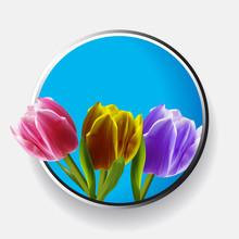 Trio Of Tulips Over Metallic Border