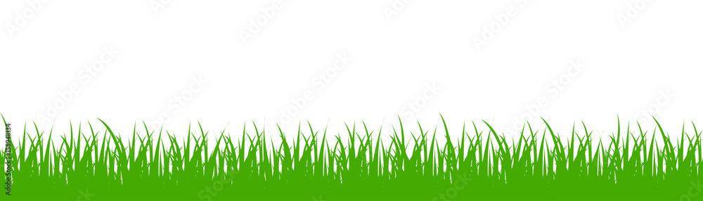 Fototapety, obrazy: Green grass on white background - vector