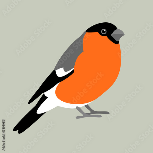 Photo bullfinch bird vector illustration style Flat profile