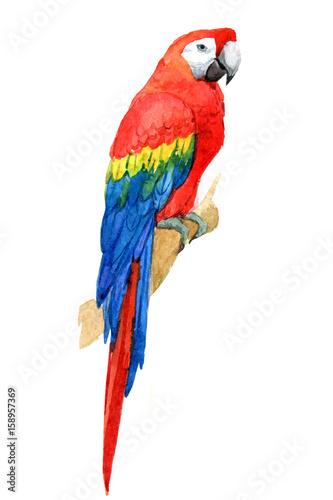 tropikalna-kolorowa-papuga-ara-na-bialym-tle