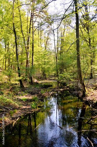Fotobehang Bossen Trees in Briesetal, a flooded valley in Germany