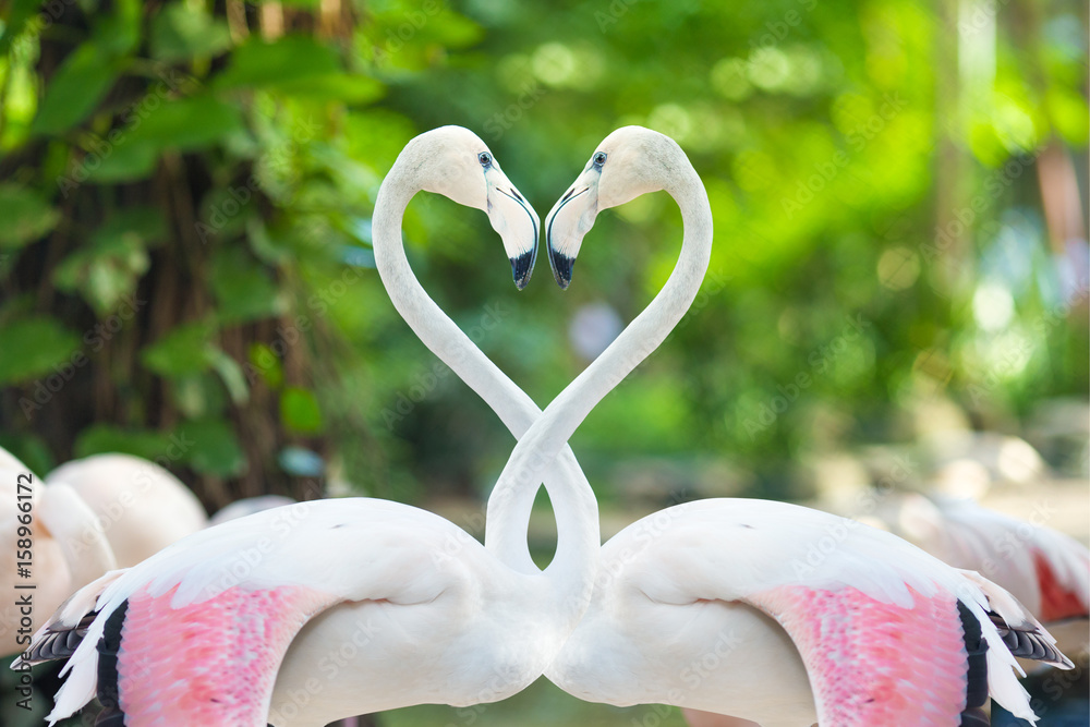 Two flamingos making a heart shape