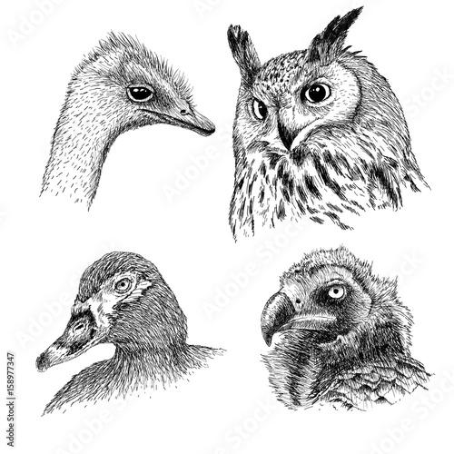 Canvas Prints Owls cartoon realistic heads of wild birds