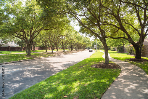 Poster Texas Side view of asphalt road, street in suburban residential area with lot of green trees in Katy, Texas, US. America is an excellent green and clean country. Environmental and transportation background.