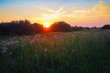 Sunset in countryside. Scenic colorful sky over rural meadow.