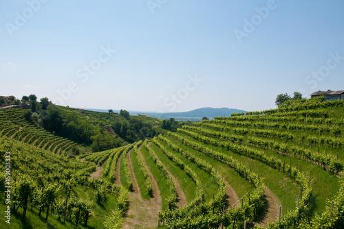 Fotografie, Obraz  Panorama of beautiful landscapes of valdobbiadene