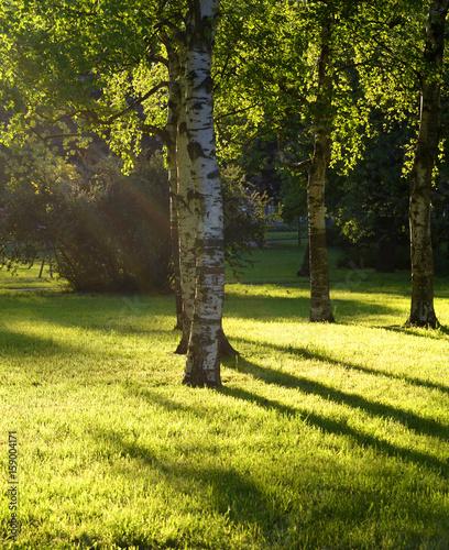 Deurstickers Golf Park at summer.
