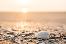 Sea Shell On Beach In The Sunrise