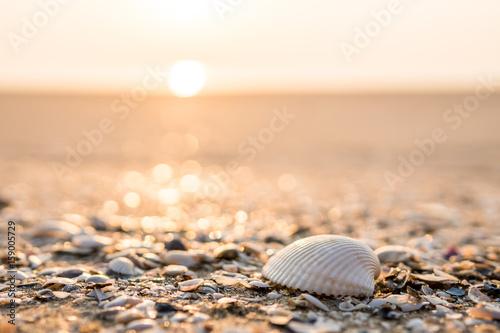 Valokuvatapetti Sea shell on beach in the sunrise