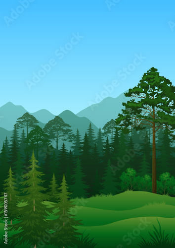 Spoed Foto op Canvas Groene Landscape, green summer forest with fir and birch trees and cloudy sky. Vector