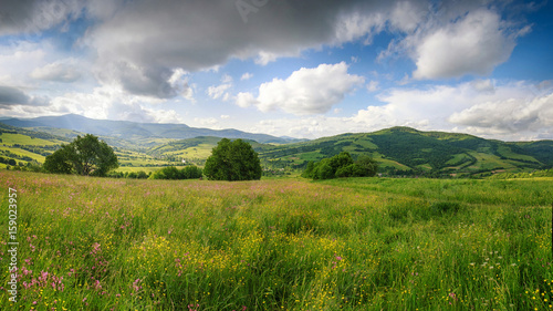 Panoramic view of the blooming flowers, summer meadow in the mountains and blue cloudy sky. Alpine seasons, natural background. - 159023957