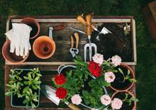 Gardening Equipment, Plants An...
