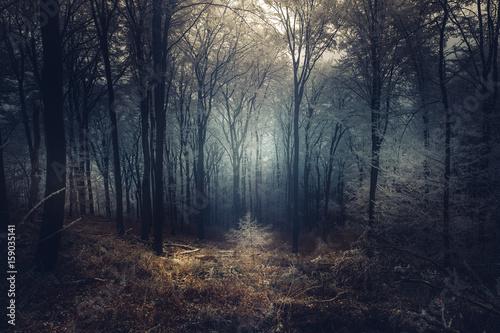 Valokuva  Winterlandschaft