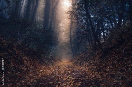 Valokuva  Herbstschein