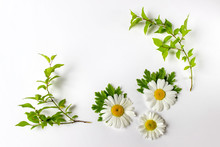 Composition With Plants - Flat Lay Of Isolated Daisies And Green Leaves On White Background.