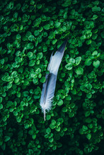 Blue Feather On The Grass