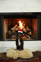 Chihuahua Dog Wearing A Santa Hat In Front Of Fireplace