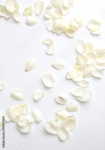 ナチュラルな白い薔薇の花びら、白背景