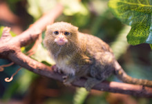 The Smallest Monkey In The Zoo