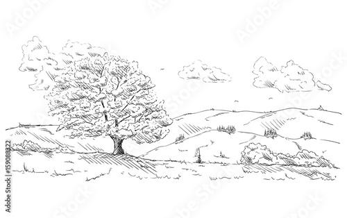 Spoed Foto op Canvas Wit tree at landscape