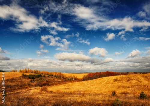Foto op Aluminium Oranje eclat Autumn field. Picturesque hilly field. A birch grove and a beautiful sky