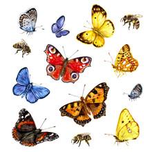 Watercolor Set Of Butterflies ...