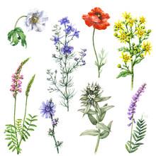 Set Of Wild Flowers