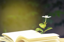 Open Book Flower On The Background Of The Garden,Vintage Tone.