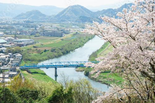 徳倉橋と桜