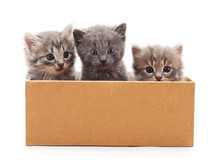 Kittens In The Box.