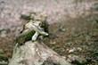 Ein Waldpilz auf einem Holzast im Teuterburger Wald