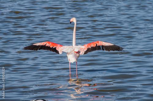 Foto op Aluminium Flamingo Flamingos at Priolo's saline Syracuse Sicily - Italy