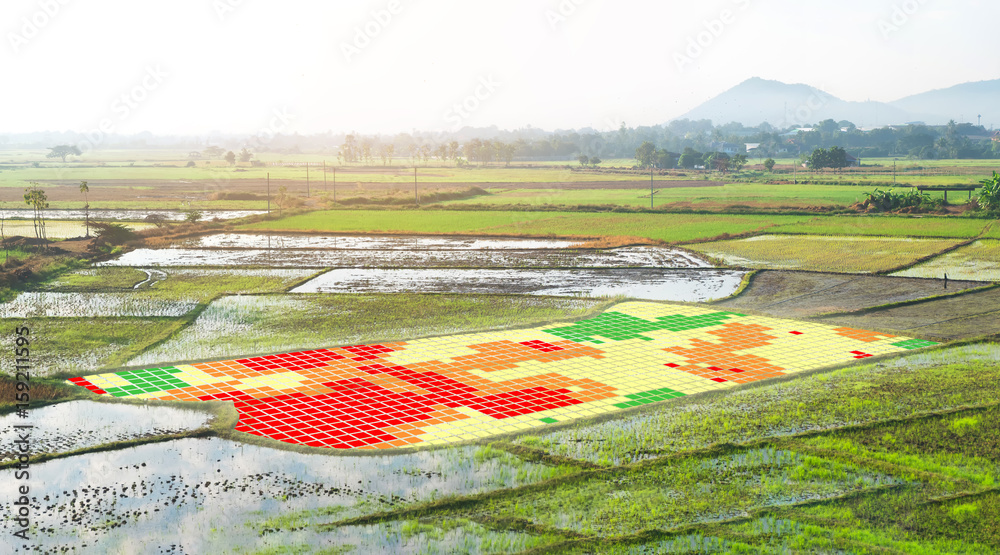 Fototapety, obrazy: Smart agriculture , farm , precision farming concept. NIR images used to create field health maps using the normalize difference vegetation index in field rice.
