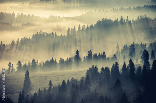 Matin avec brouillard Misty mountain forest landscape in the morning, Poland