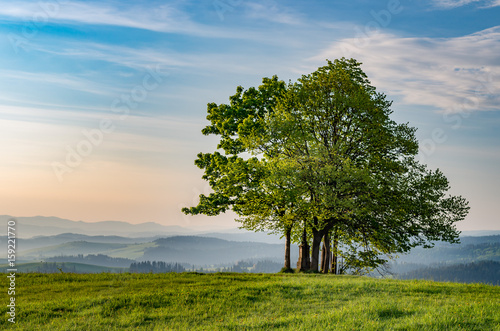 Obrazy Polska lonely-tree-on-grandeus-mountain-poland-landscape-spisz