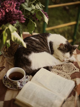 Sleeping Cat With Open Book Li...