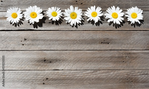 Foto op Canvas Madeliefjes Wild daisies in a row on wood background