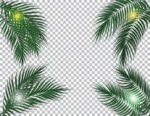 Tropical Dark Green Palm Leave...