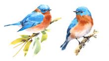 Bluebirds Two Birds Watercolor...