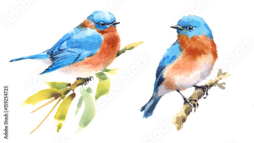 Bluebirds Two Birds Watercolor Hand Painted Illustration Set isolated on white b Canvas-taulu