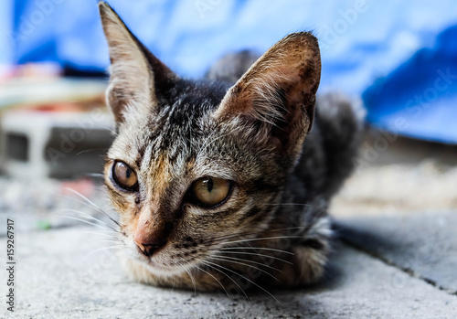 Spoed Foto op Canvas Canada brown cat is sitting on the floor with blurred background, selective focus at eyes, intend or propose life concept