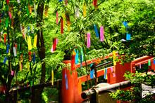 七夕 北野天満宮  青紅葉 京都 Tanabata Festival, Kyoto Japan
