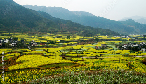 Aluminium Prints Rice fields Rural landscape in wuyuan county, jiangxi province, china.