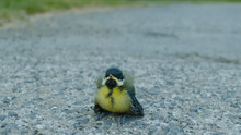 Tit On The Road After Left The...