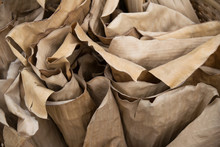Close Up Roll Dry Banana Leaves Abstract Style