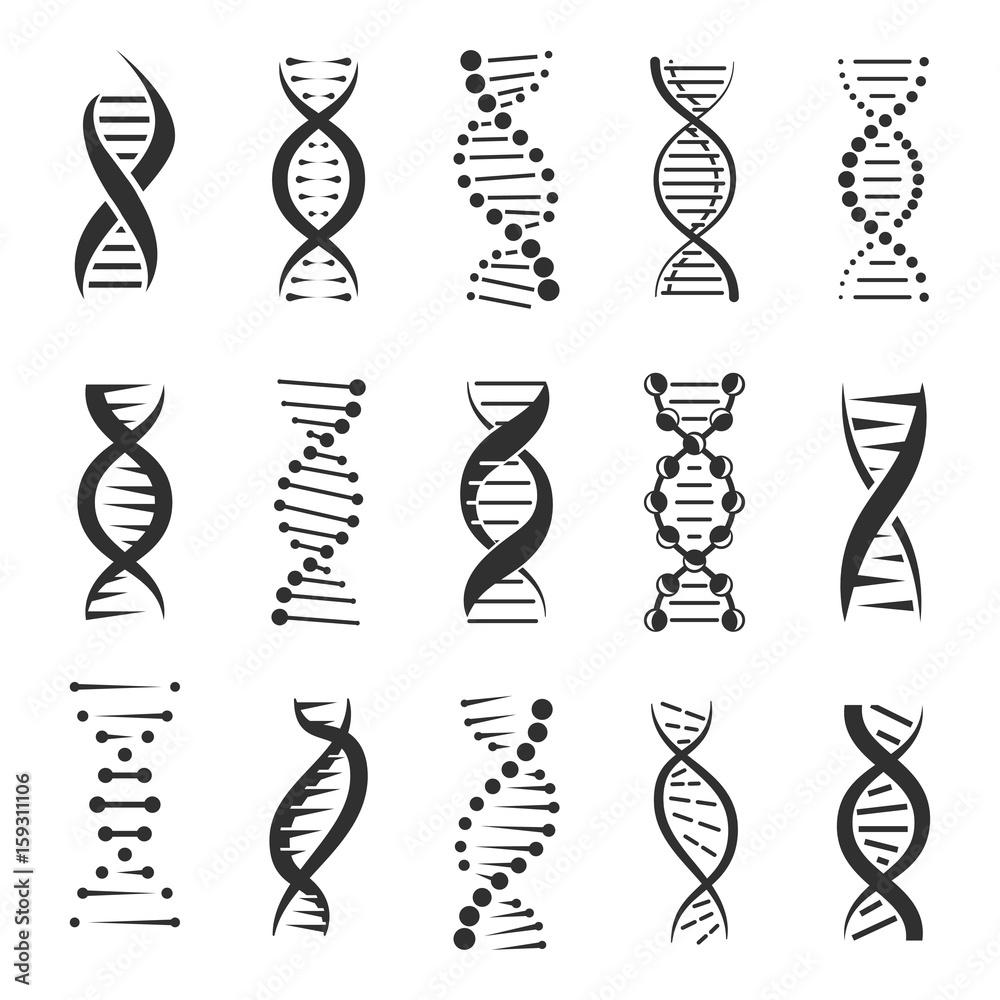 Fototapeta Double DNA helix vector icons